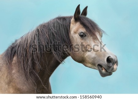 Portrait of Arab horses - stock photo