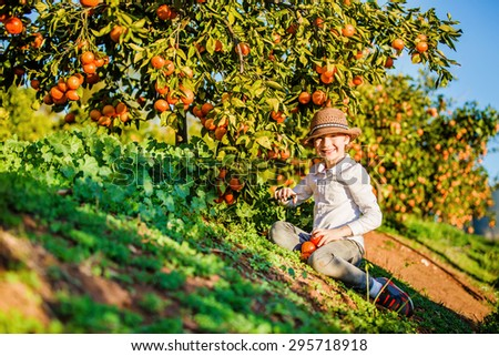 Portrait of attractive cute young boy picking mandarins at citrus farm on sunny summer day. Family healthy, fun activity on holidays concept - stock photo