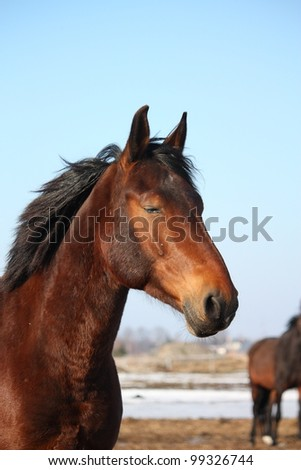 Portrait of bay horse in the spring