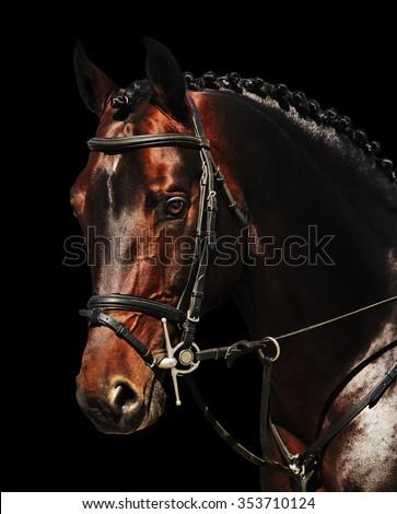 Portrait of bay horse isolated on black - stock photo