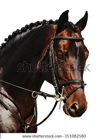 portrait of bay horse isolated on white