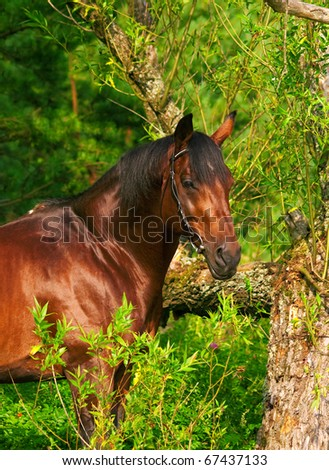 portrait of bay horse near the tree