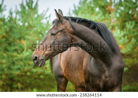 Portrait of bay horse with long beautiful neck