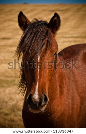Portrait of beautiful brown horse