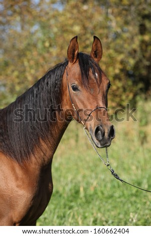 Portrait of beautiful brown horse in autumn