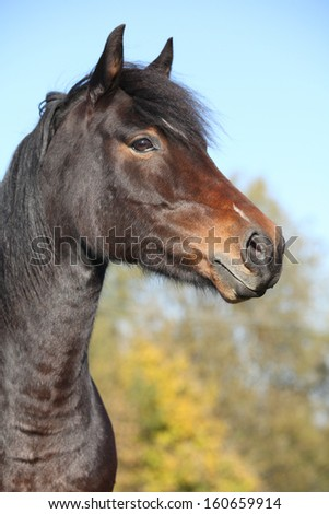 Portrait of beautiful brown mare in autumn