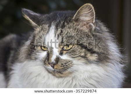 Portrait of beautiful cat with yellow eyed, close up