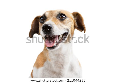 Portrait of beautiful happy smiling welcoming dog. Looking at the side - stock photo