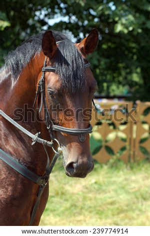 Portrait of beautiful horse in summer - stock photo