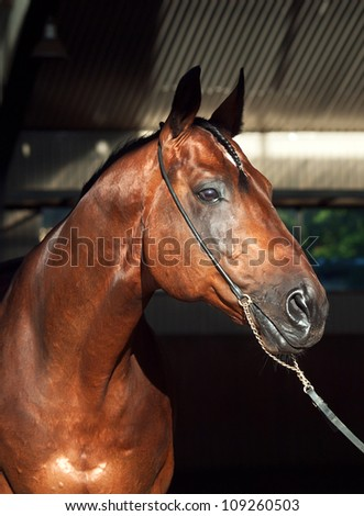 portrait of beautiful horse on dark background outdoor sunny morning