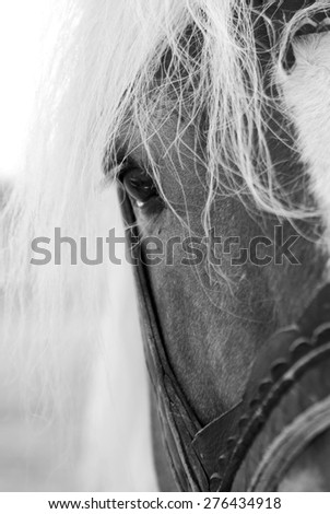 portrait of beautiful horse watching - stock photo