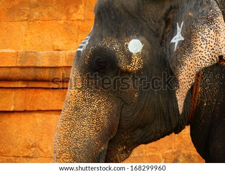 painted elephant stock photos images pictures shutterstock. Black Bedroom Furniture Sets. Home Design Ideas