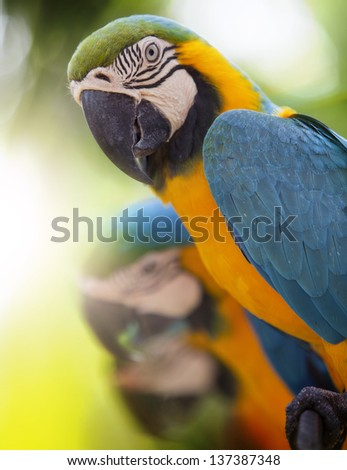 Portrait of beautiful macaw with nature background.