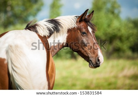 Portrait of beautiful painted horse on the pasture - stock photo