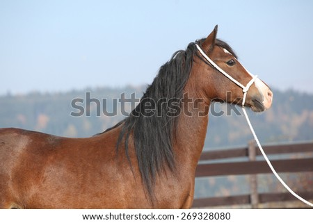 welsh cob stock images  royalty free images   vectors shutterstock stallion clipart png stallion clipart png
