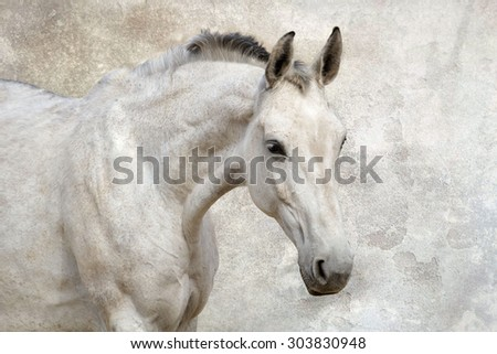 Portrait of beautiful white horse against the wall - stock photo