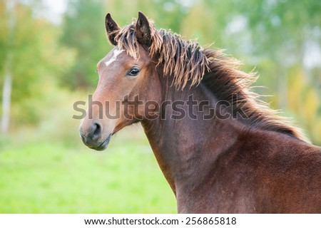 Portrait of beautiful young bay horse in summer