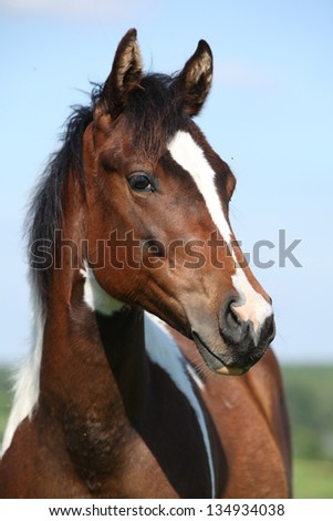 Portrait of beautiful young paint horse mare with blue background - stock photo