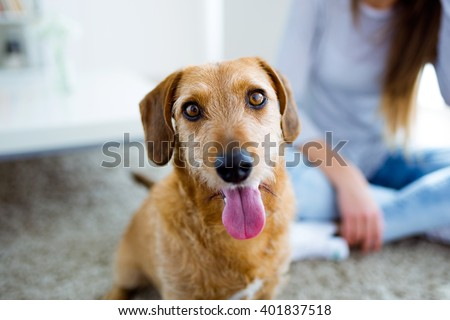 Portrait of beautiful young woman with dog playing at home. - stock photo