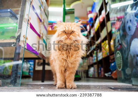 Portrait of big cat in front of animal shop. - stock photo