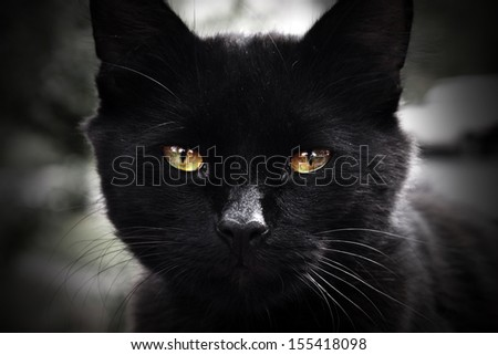 Portrait of black cat with green eyes  - stock photo
