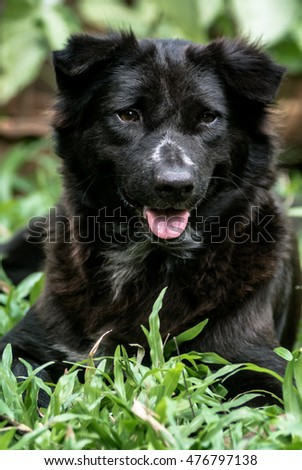 Portrait of black dog at garden