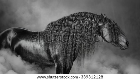 Portrait of black Frisian horse with long mane in the smoke, black and white photography - stock photo