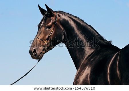 Portrait of black horse against blue sky - stock photo