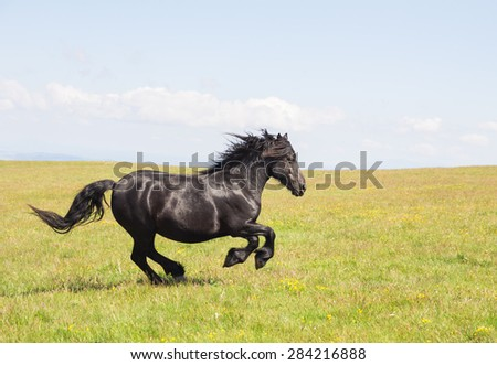 Portrait of black stallion horse runs gallop on the mountain landscape