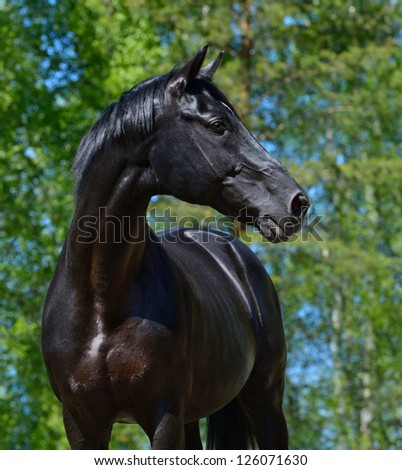 Portrait of black stallion of Russian riding breed - stock photo