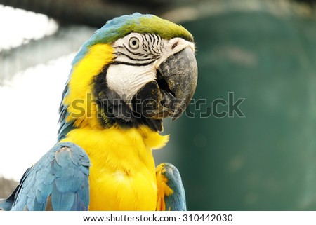 Portrait of blue and gold macaw parrot - stock photo