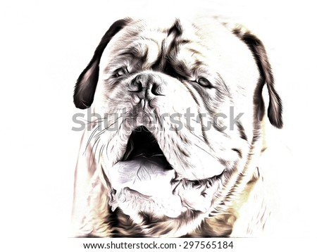 portrait of bordeaux dog drawing filter - stock photo
