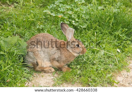 Portrait of brown bunny on the grass - stock photo