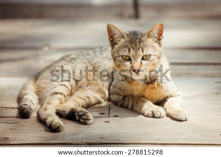 Portrait of brown eyed cat on old wooden