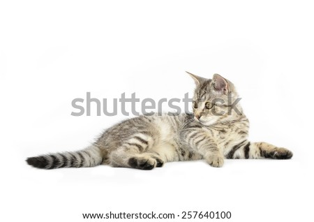 Portrait of brown-eyed kitten, lying cat isolated on white background