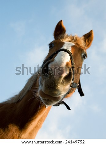 portrait of brown horse against a background of sky - stock photo