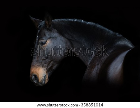 Portrait of brown horse on the black background