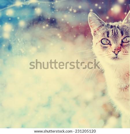 Portrait of cat e against beautiful winter nature blure landscape - stock photo
