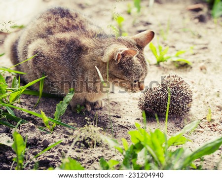 Portrait of cat eye looking to the small hedgehog  - stock photo