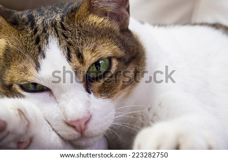 Portrait of cat staring something on sofa