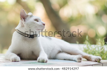 Portrait of cat with blurred background