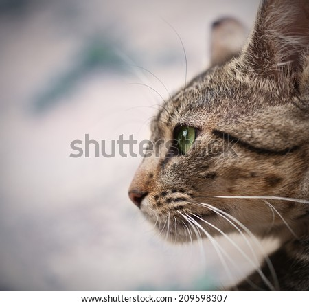 portrait of cat with green eyes