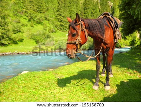 Portrait of chestnut harness horse against the background of beautiful nature landscape - blue high mountain river and green fields in soft wood of Tien Shan range, Kyrgyzstan, Central Asia  - stock photo