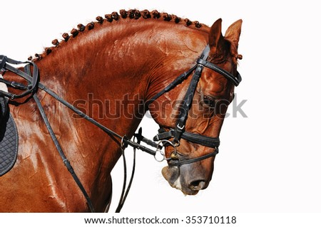 Portrait of chestnut horse isolated on white - stock photo