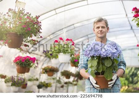 Portrait of confident gardener holding flower pot in greenhouse - stock photo