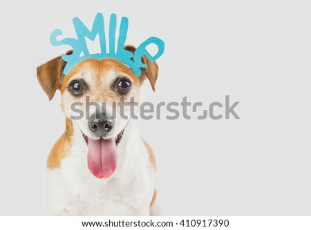 Portrait of cool smart Jack Russell terrier dog looking to you and saying Smile! Requests offers to smile cute pet. Do not leave anyone indifferent!   gray ( grey ) background. greeting birthday card