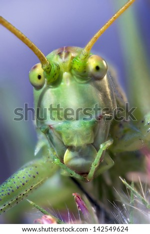 portrait of cricket with colored background - stock photo