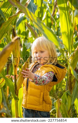Portrait of curious child find corn in cornfield - stock photo