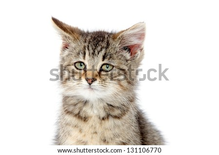 Portrait of cute baby tabby kitten on white background