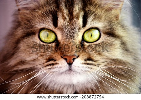 Portrait of cute cat with big yellow eye closeup